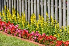 Blumenbeet stockbilder