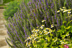 Blumenbeet mit Kamille und Glockenblume Stockfotos