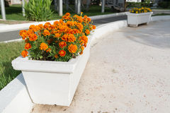 Blumenbeet mit orange Ringelblumenblumen im Garten Lizenzfreie Stockfotografie