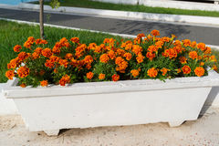 Blumenbeet mit orange Ringelblumenblumen im Garten Lizenzfreie Stockbilder