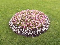 Blumenbeet mit verschiedenen Farben mitten in dem Rasen Stockfotografie