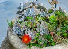 Blumenbeet mit verschiedenen Kakteen, roter Blume und Gras stockbilder