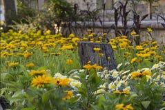 Blumenbeet von gelben Blumen und von Gänseblümchen mit Baumstumpf Lizenzfreie Stockfotos