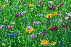 Blumenbeet von Juni Stockbild