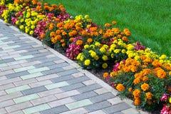 Blumenbeet von verschiedenen Farben vereinbarte entlang dem Rand des gre Stockbilder