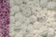 Blumenbeet/Wand von Blumen - verzierte Anzeige stockfotografie