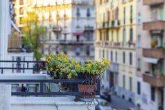 Blumenbeete auf dem Balkon bei Sonnenuntergang des Tages Lizenzfreie Stockfotografie