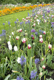 Blumenbeete im Frühjahr Stockbild