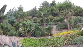 Blumenbeete mit Palmen stock footage
