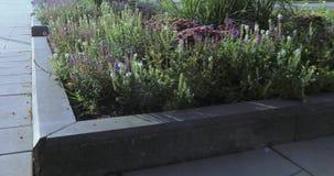 Blumenbeete und Bäume mit Büschen in der Stadt parken stock footage