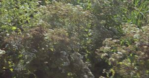 Blumenbeete und Bäume mit Büschen in der Stadt parken stock video
