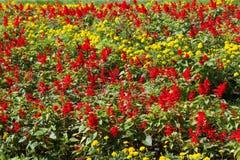 Blumenbeethintergrund Lizenzfreie Stockbilder