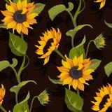 Blumenbeschaffenheit des nahtlosen Musters des Sonnenblumenvektors auf schwarzem Hintergrund stockbilder