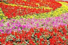 Blumenbett Stockfotos
