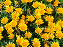 Blumenbett Stockfoto