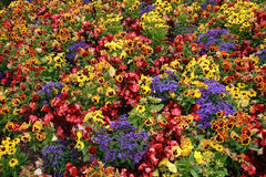Blumenbett lizenzfreie stockbilder