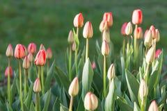 Blumenbett im formalen Garten Stockfoto