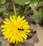 Blumenbiene Stockbild