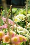 Blumenbildmakro - Indien lizenzfreie stockfotografie