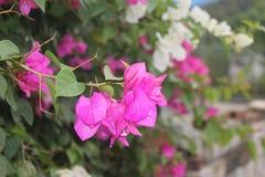 Blumenbinder vor dem Haus lizenzfreies stockfoto
