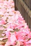 Blumenblätter Lizenzfreies Stockbild