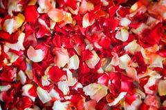 Blumenblätter Lizenzfreie Stockfotografie