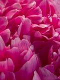 Blumenblätter Stockfoto