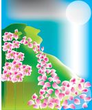 Blumenblätter Stockfotos