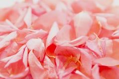 Blumenblätter Lizenzfreies Stockfoto