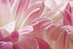 Blumenblätter Stockbild