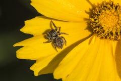 Blumenblätter auf einer Spinne Lizenzfreie Stockfotos