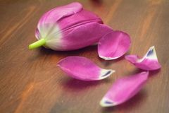 Blumenblätter auf Tabelle Lizenzfreies Stockfoto
