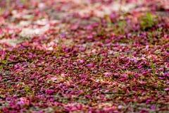 Blumenblätter aus den Grund Stockfotos