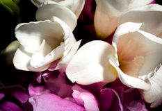 Blumenblätter in der Blüte Lizenzfreies Stockbild