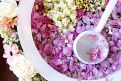 Blumenblätter der Blume lizenzfreies stockfoto
