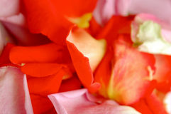 Blumenblätter der Blumen Lizenzfreie Stockbilder