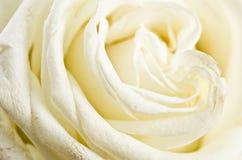 Blumenblätter einer weißen Rose Lizenzfreies Stockfoto
