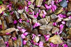 Blumenblätter und Felsen Stockfotos