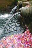 Blumenblätter und heiliges Wasser stockfotografie