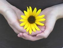 Blumenblätter von Liebe 02 Stockfoto