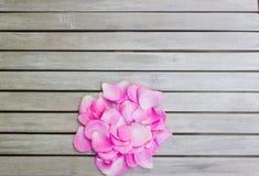 Blumenblätter von rosa Rosen auf einem weißen Holztisch lizenzfreie stockbilder