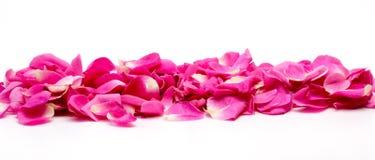 Blumenblätter von stiegen Lizenzfreies Stockfoto