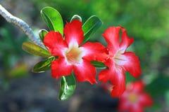 Blumenblühen Stockfoto