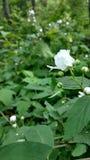 Blumenblüte Lizenzfreie Stockfotografie