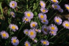 Blumenblüte Lizenzfreies Stockbild