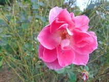 Blumenblüte 2 Lizenzfreie Stockfotos