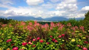 Blumenblüte im Park der Königin Elizabeth Stockfotografie
