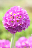 Blumenblütengarten Lizenzfreie Stockfotografie