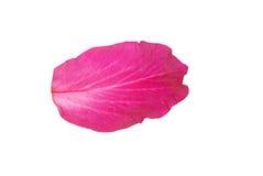 Blumenblatt Stockbild