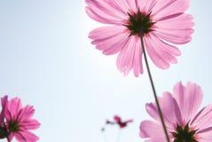 Blumenblatt Lizenzfreie Stockfotografie